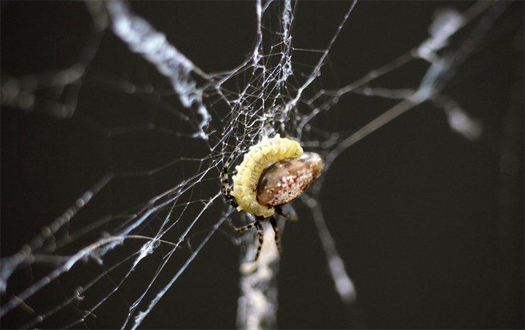 Удивительные способности некоторых паразитов