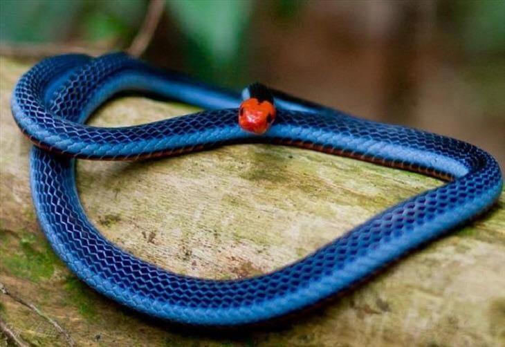 Змеи гораздо страшнее и красивее, чем вы думаете