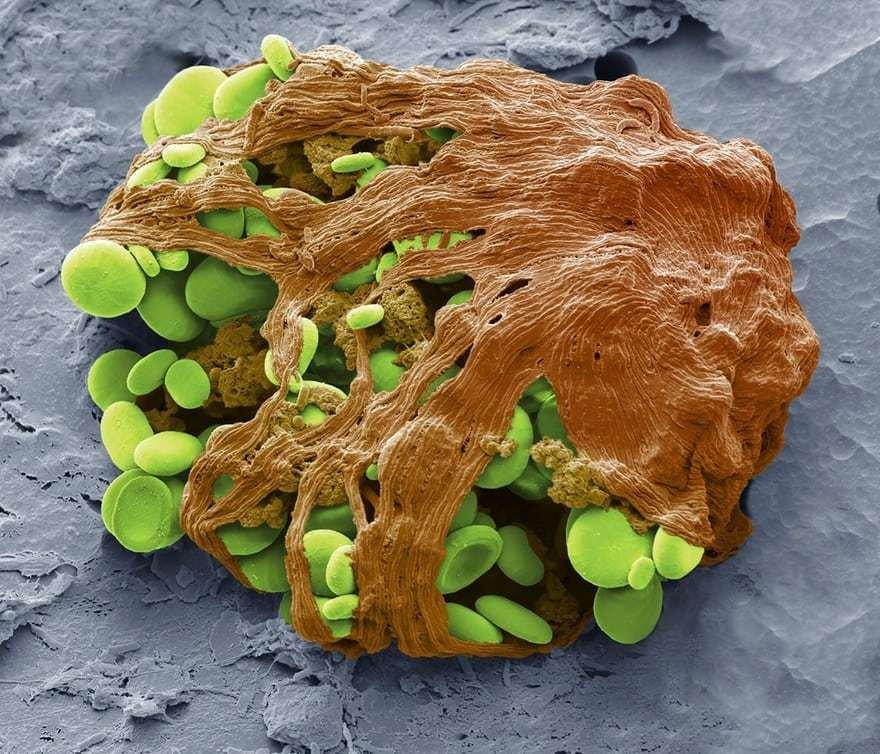 Шорт-лист фотоконкурса International Images for Science