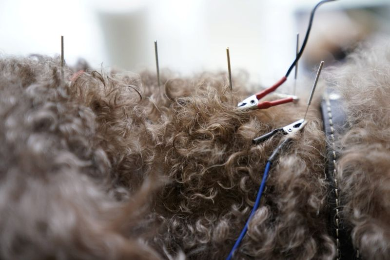 В китайском центре домашних животных лечат иглоукалыванием и прижиганием