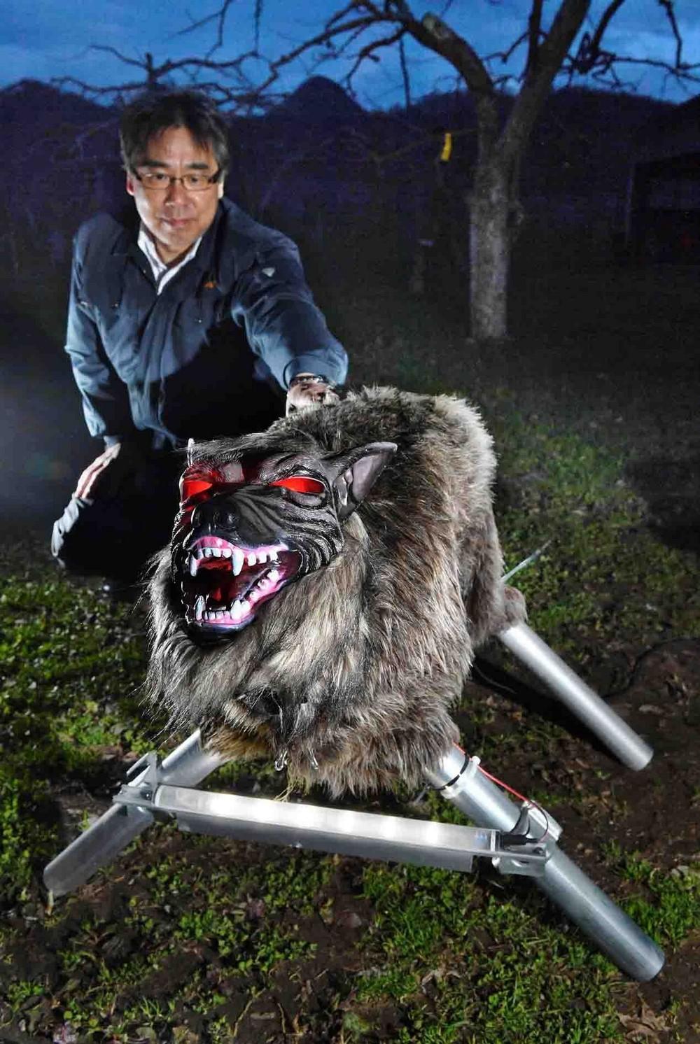 Волк-робот на охране сельскохозяйственных культур