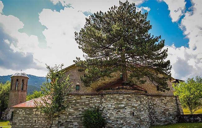 Сквозь греческую церковь растет столетняя сосна