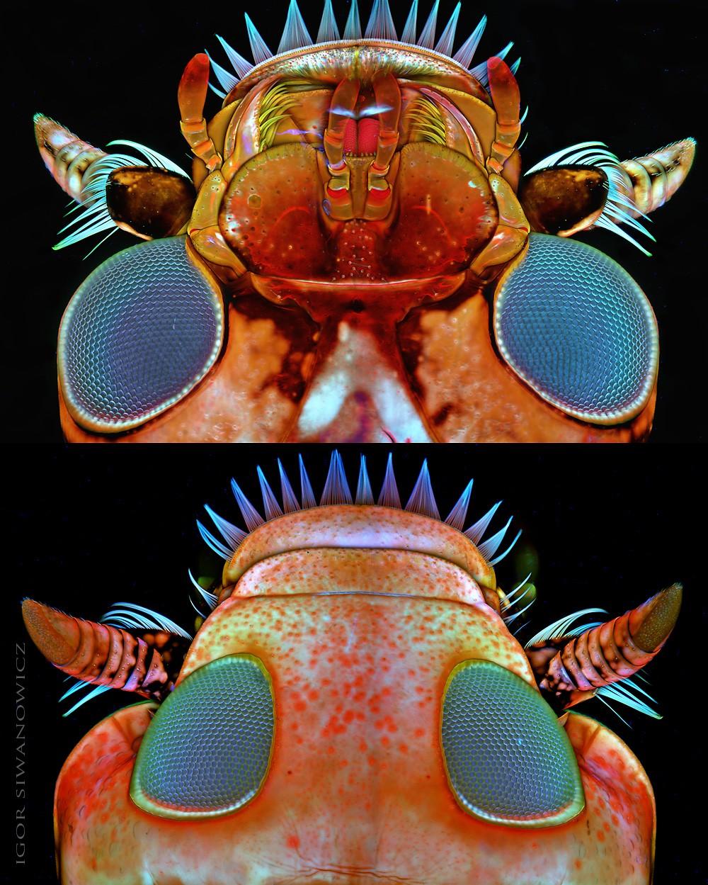 Макрофотографии крохотных существ от Игоря Сивановича