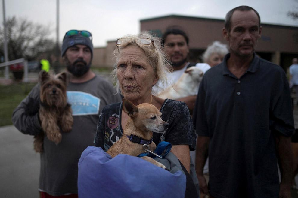 Как в США спасали домашних животных от урагана Харви