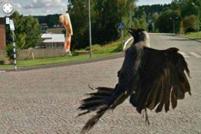 Странные и необычные фото на Google Street View