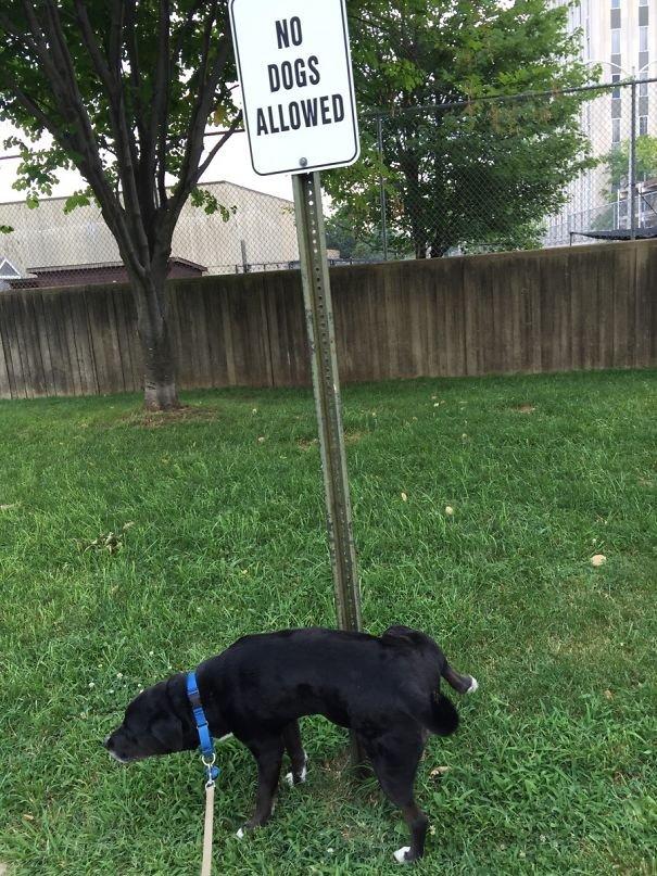 Животные, которым нравится нарушать правила
