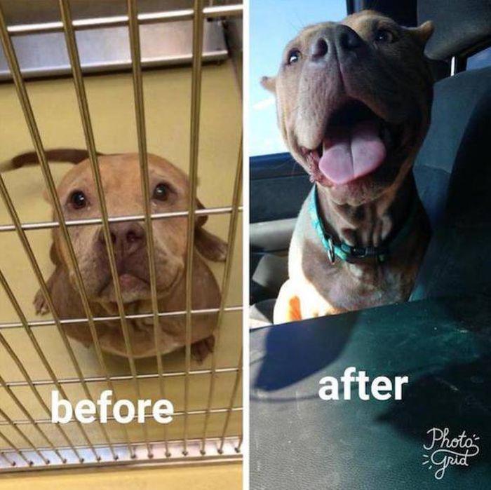 Животные, которых приютили: до и после