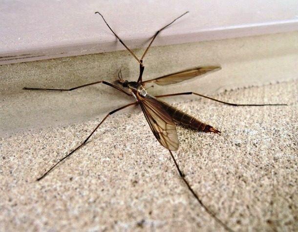 Самые надоедливые насекомые на Земле