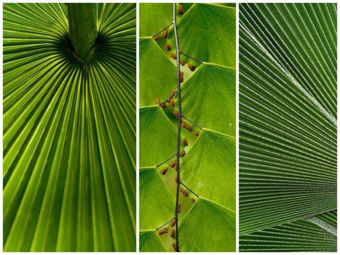 10 идеальных линий в природе