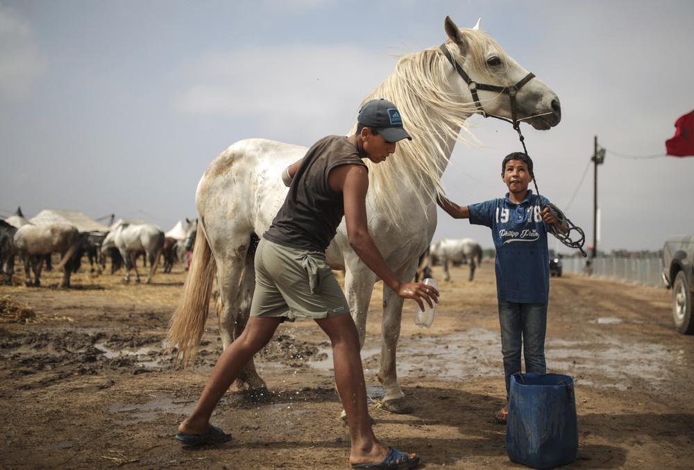 Фестиваль в Марокко: древние традиции верховой езды