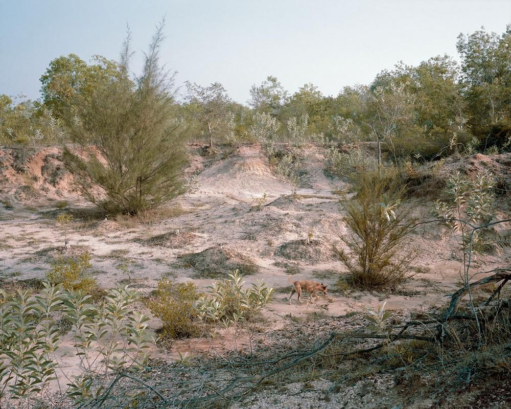 Сообщество единомышленников превращает пустыню в фантастический лес
