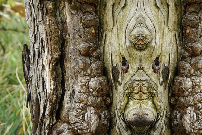 Превращение деревьев в сказочных персонажей