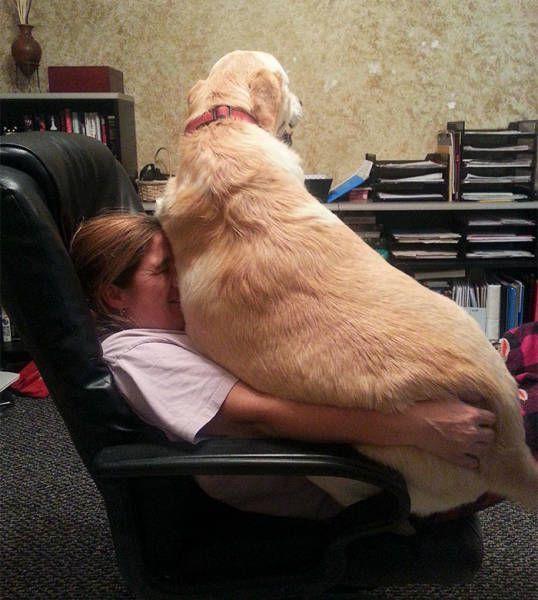 Крупные собаки ложатся на своих хозяев