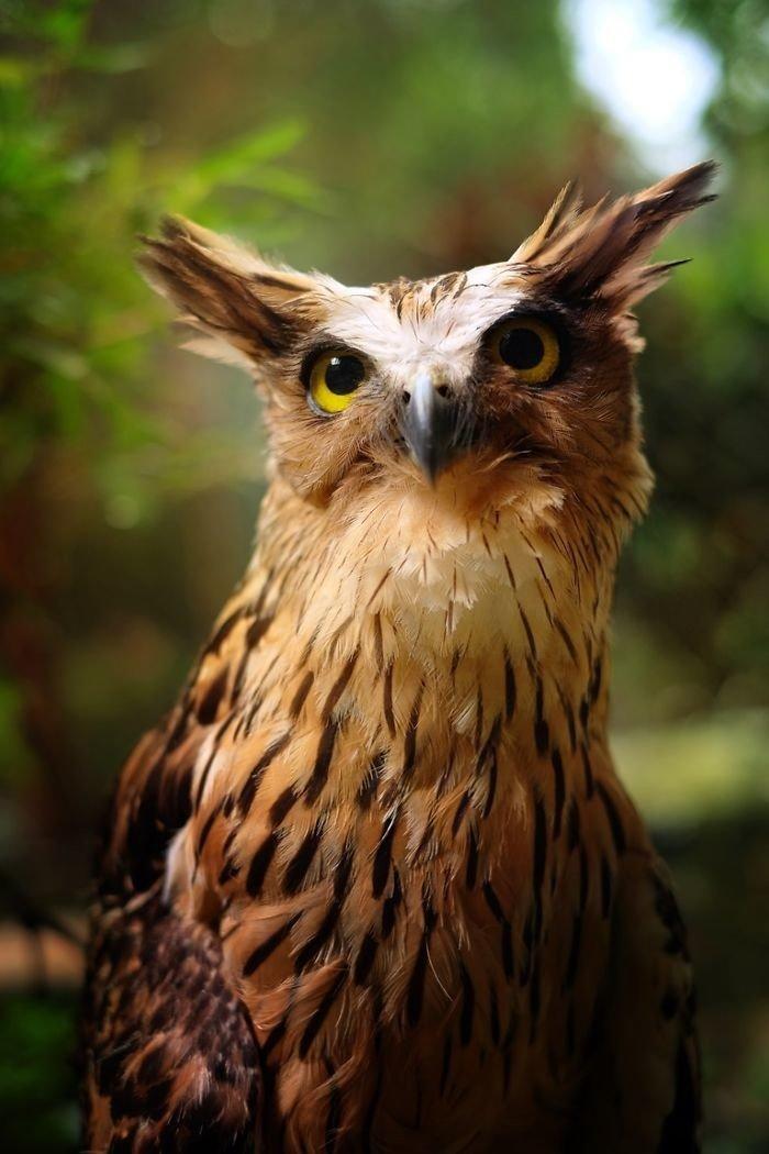 Мудрые и красивые совы в объективе малазийского фотографа