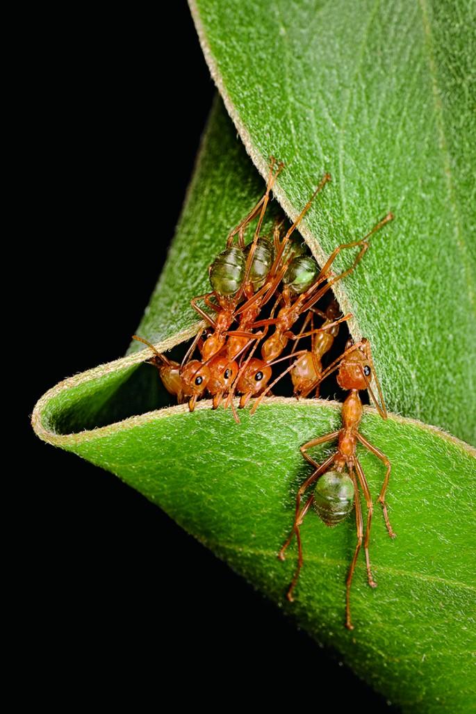 Самые необычные жилища насекомых и животных