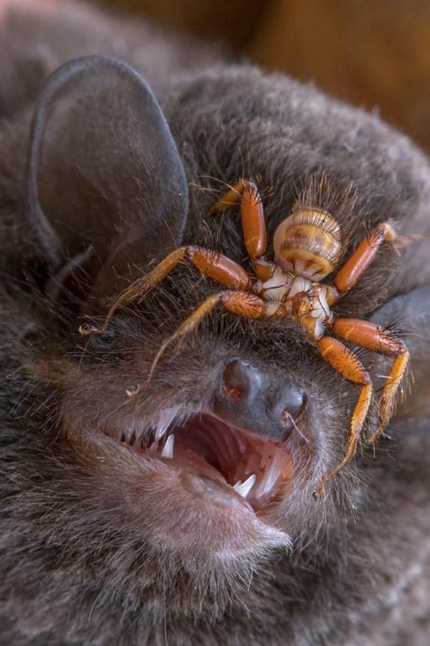 Жуткие и пугающие фотографии шокирующей природы