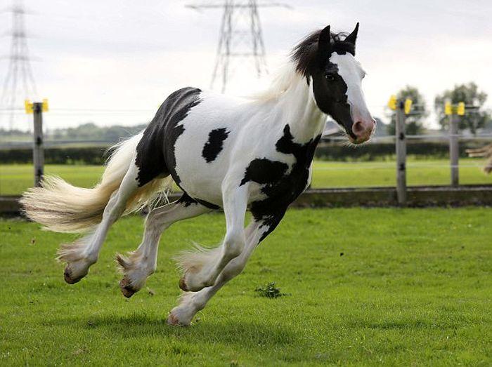 Спасенный жеребенок превратился в прекрасного коня