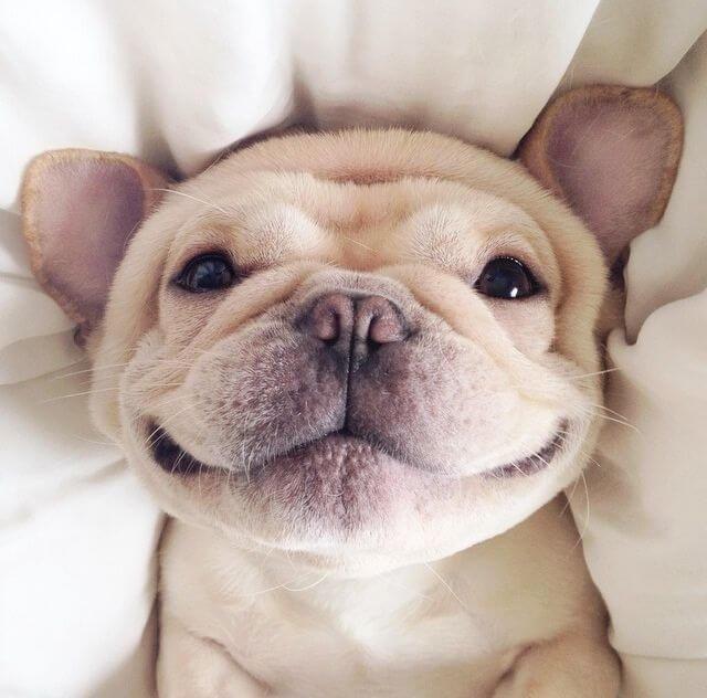 Улыбчивые собаки заряжают позитивом