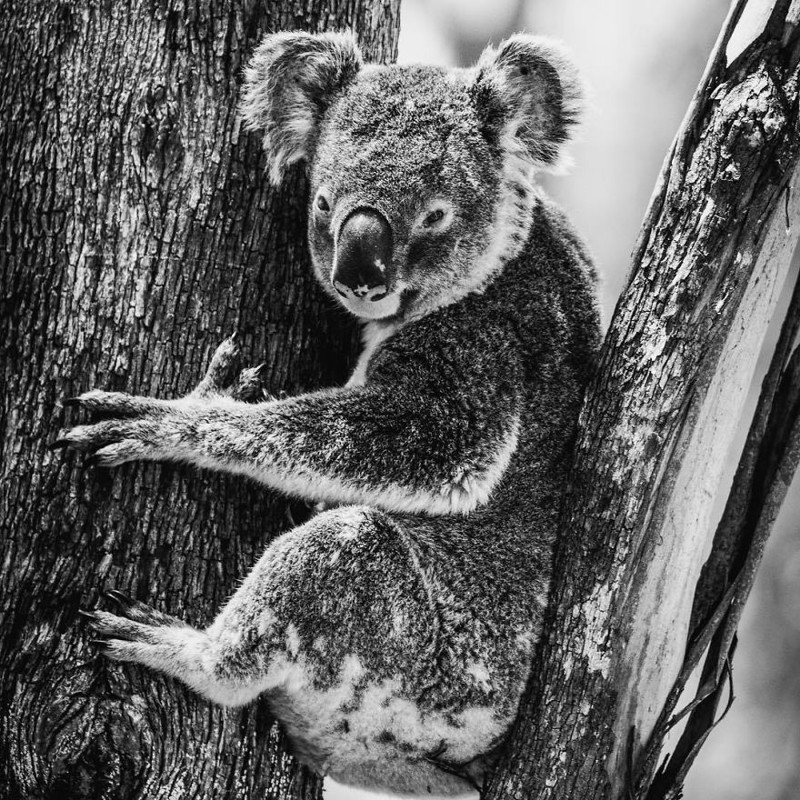 Чудеса живой природы на снимках сына Стива Ирвина Роберта