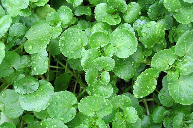 Дикие растения, которые помогут выжить