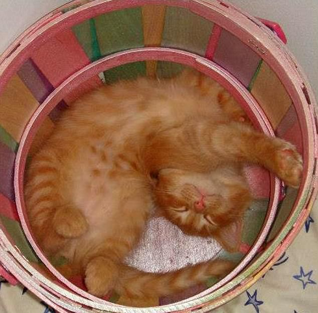 Коты умеют спать в самых неудобных местах