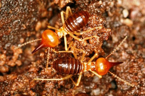 15 занимательных фактов о муравьях