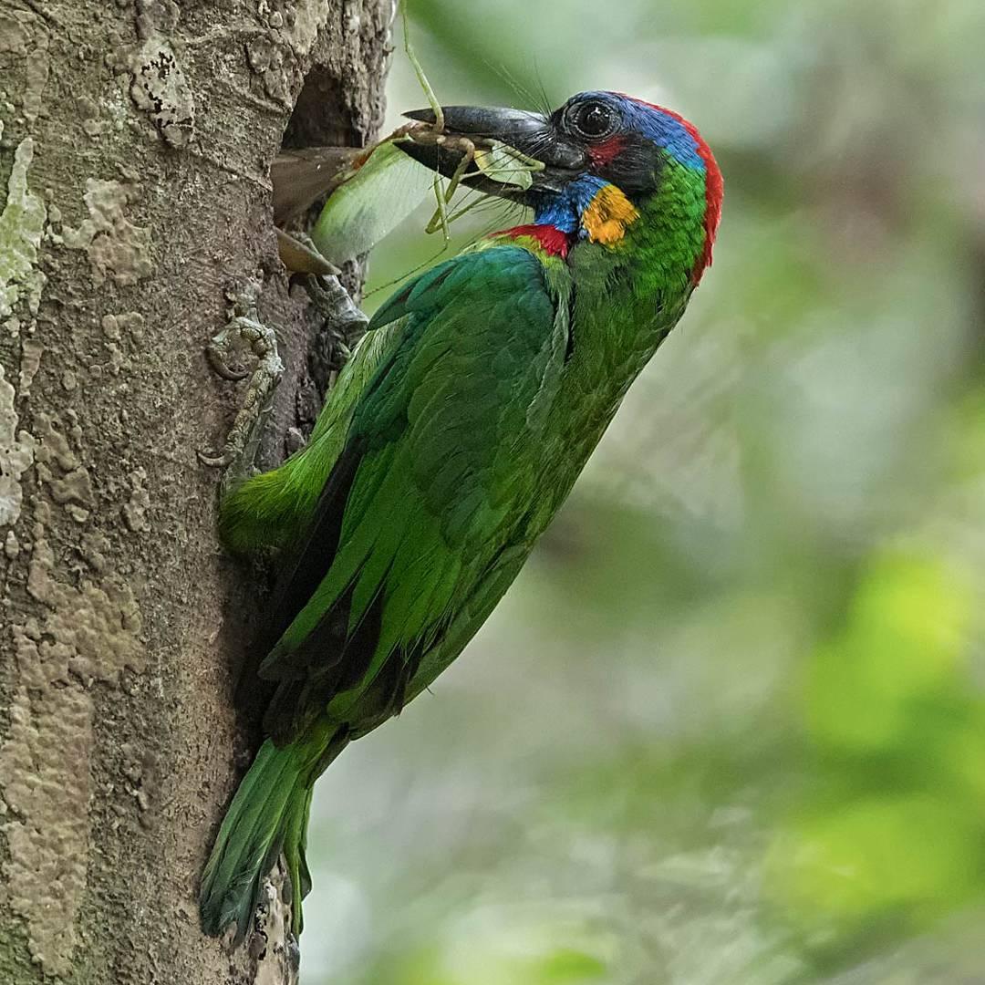 Удивительные птицы от Джонсона Чуа