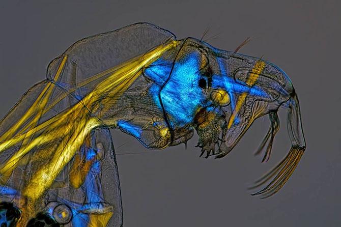 Красочные фотографии живых организмов под микроскопом