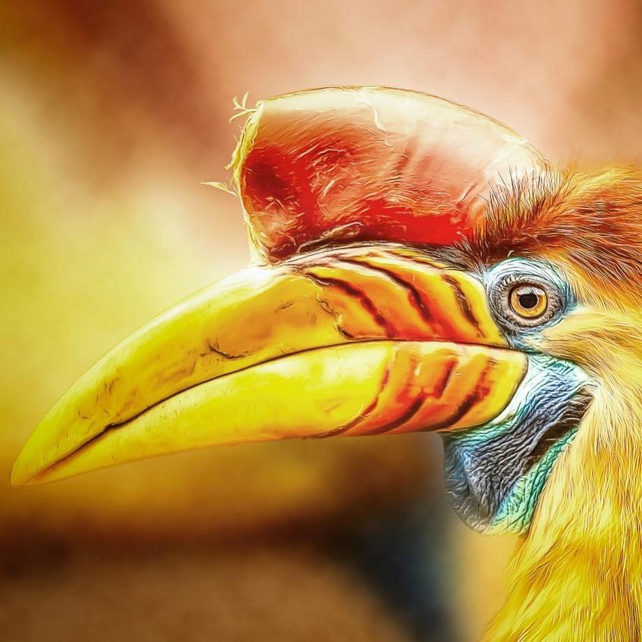 Портреты животных и птиц от Мануэлы Кульпа