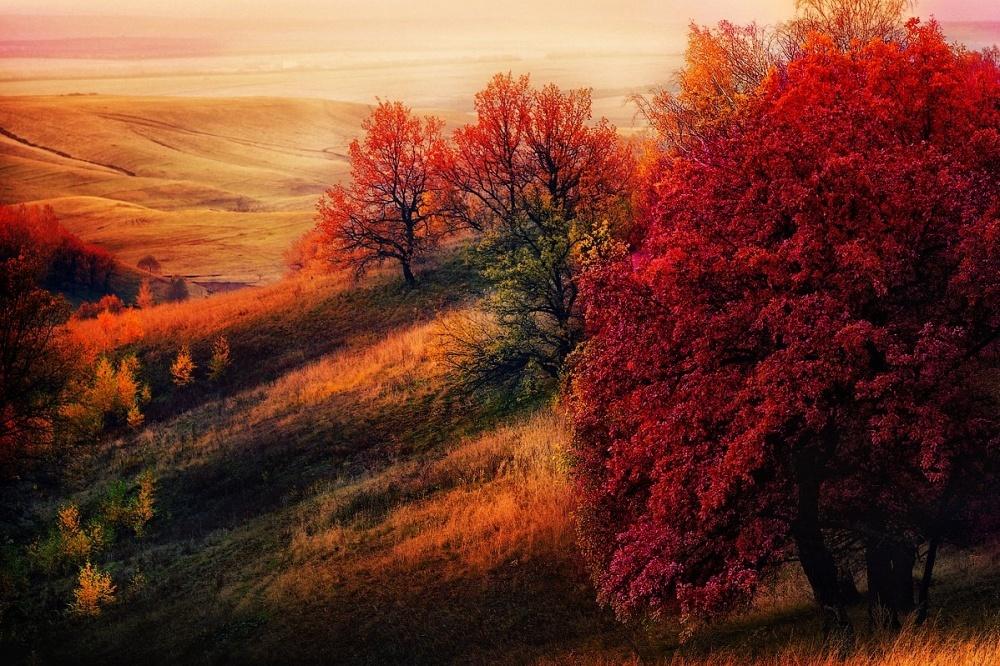 Красота осени из разных уголков мира