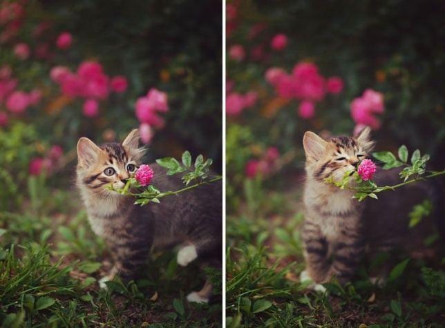 25 фотографий милых, пушистых зверюшек