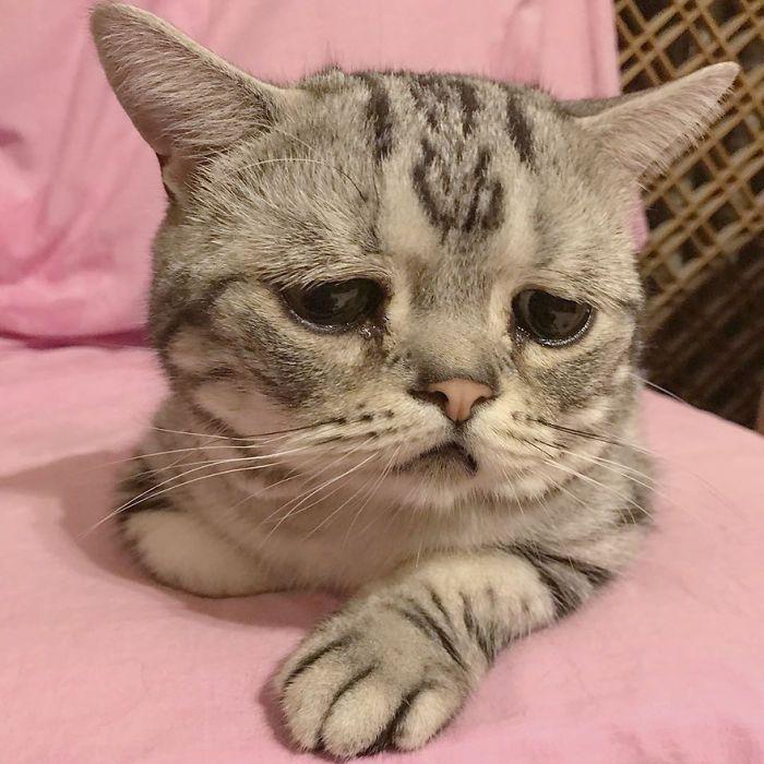 Луху - самая грустная кошка