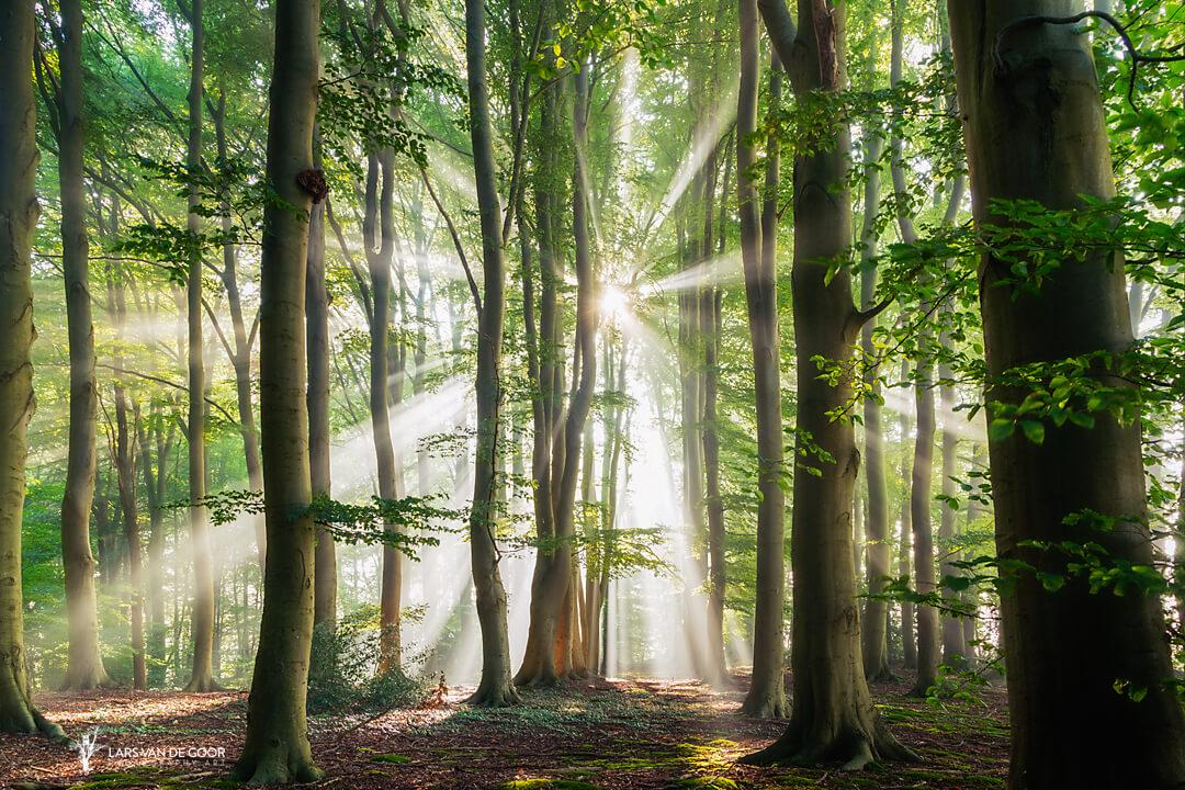 Волшебство природы на снимках Ларса ван де Гура