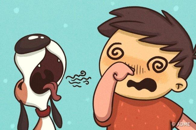 13 комиксов о том, что мы все делаем со своими питомцами
