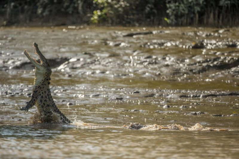Быт австралийских охотников на гигантских крокодилов