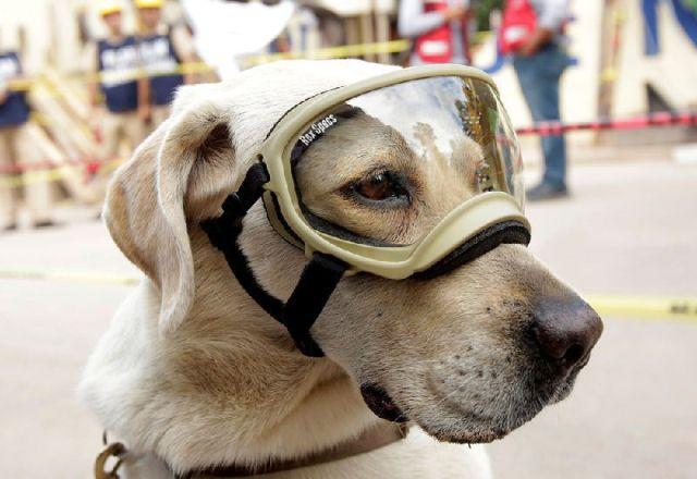 Десятки спасенных жизней сделали собаку национальным героем Мексики