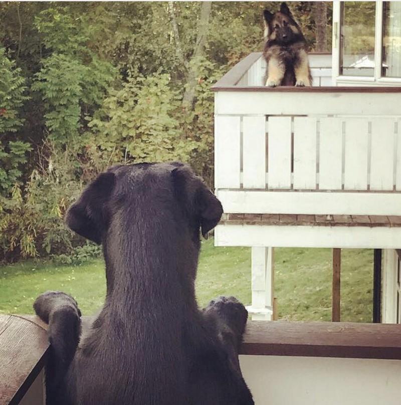 Забавные и милые животные заряжают позитивом