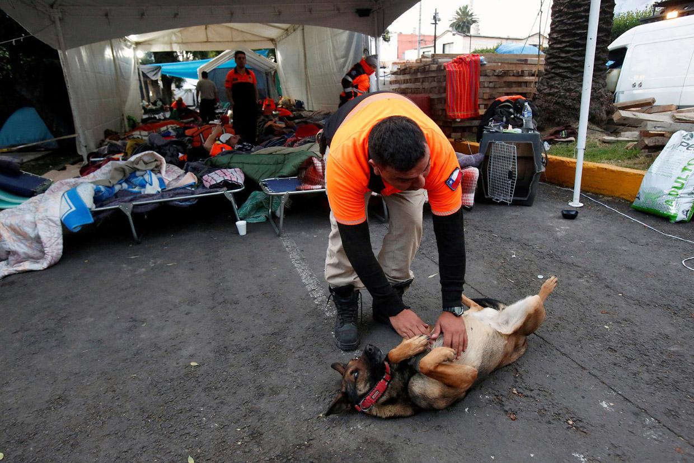Как трудятся собаки, обученные доставать людей из-под завалов