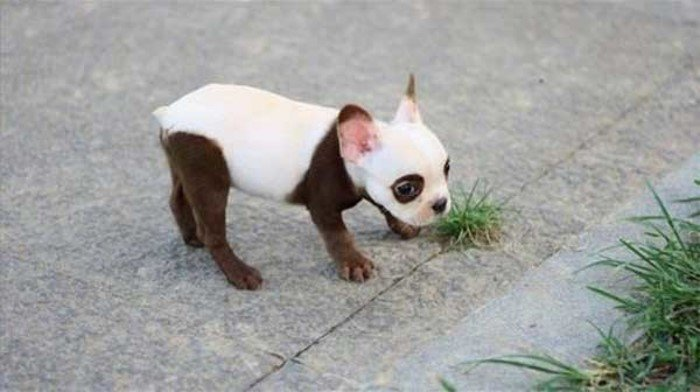 Невероятный окрас собак
