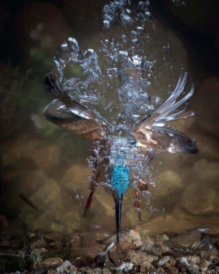 25 фотографий птиц с конкурса Bird Photographer of the Year 2017
