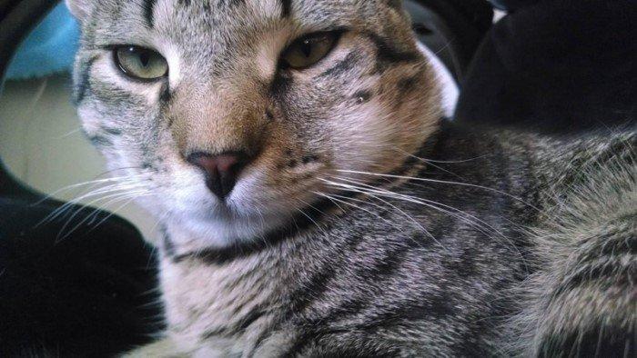 30 котов, ужаленных пчелами и осами