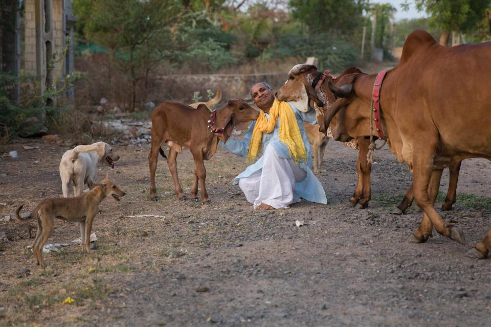 Бывший игроман из Индии бросил семью и теперь живет с тёлками