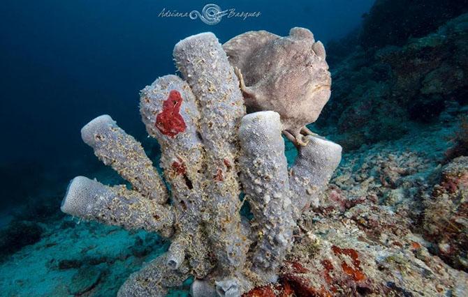 Побег из офиса в яркий мир коралловых рифов