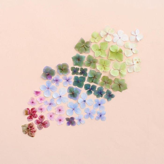 Цветовая гармония от Кэролайн Саут