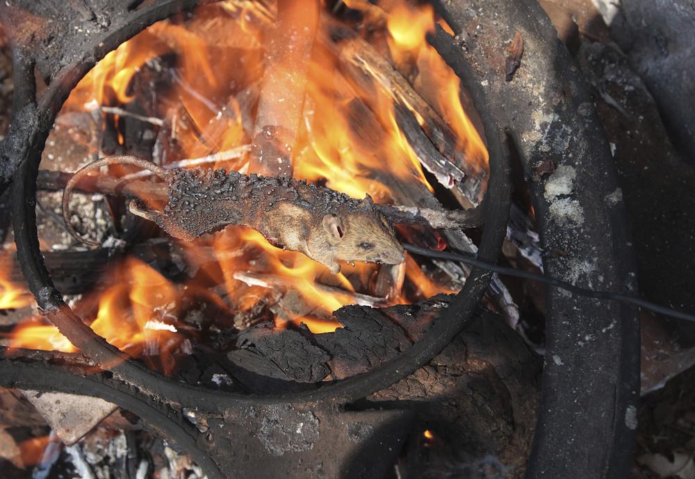 Дети ловят, жарят и продают мышей в Зимбабве