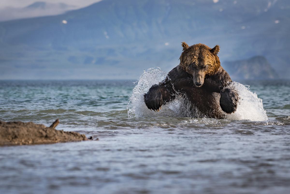 Кадры участников фотоконкурса National Geographic Nature Photographer 2017