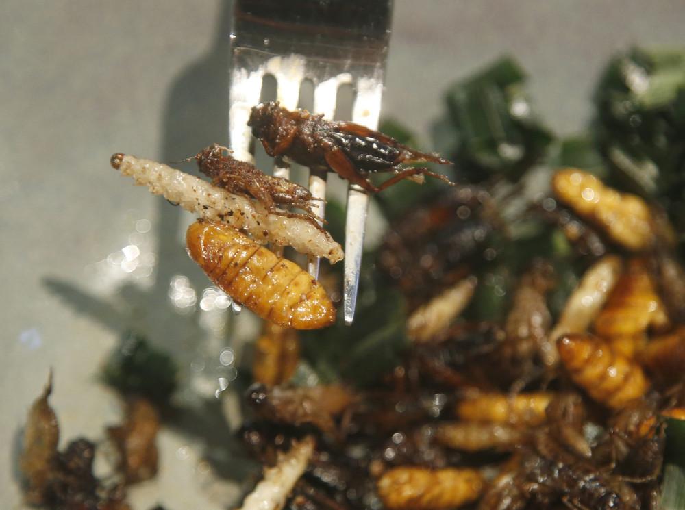 Тайские блюда для гурманов из насекомых
