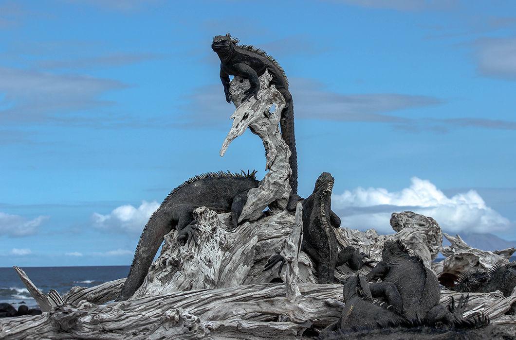 Флора и фауна Галапагосских островов