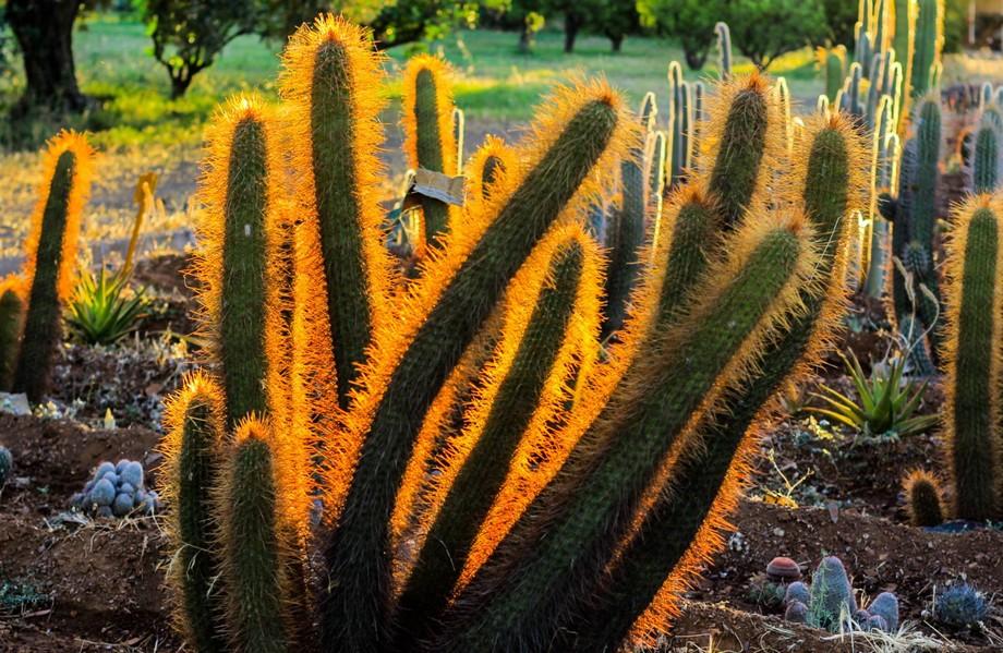 Самый крупный питомник кактусов