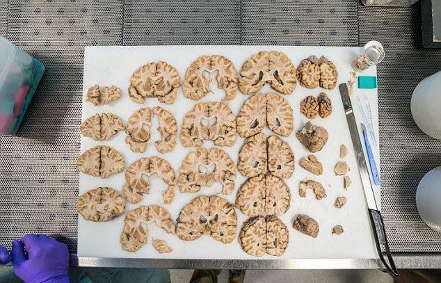 Экскурсия в лондонский банк мозгов